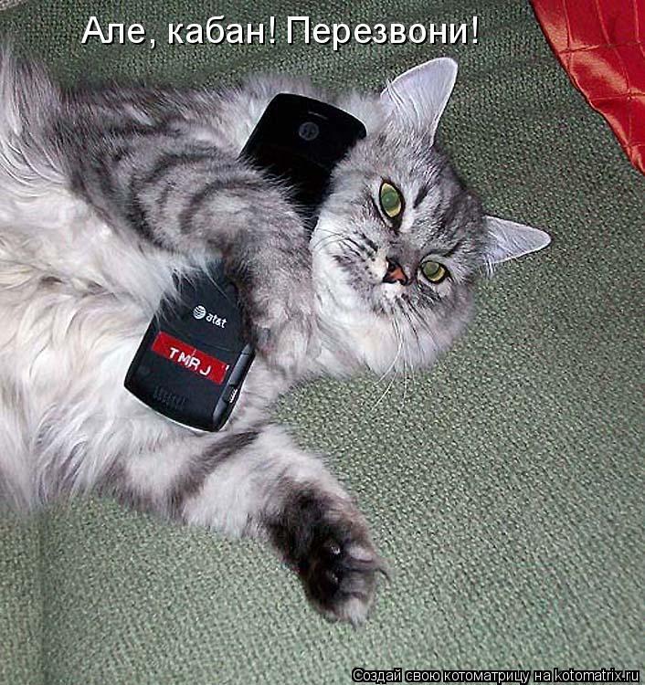 Котоматрица: Але, кабан! Перезвони!
