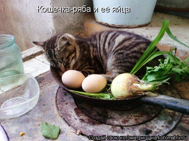 Котоматрица: Кошечка-ряба и её яйца