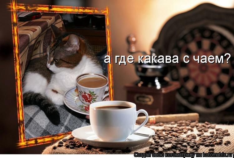 Котоматрица: а где какава с чаем?