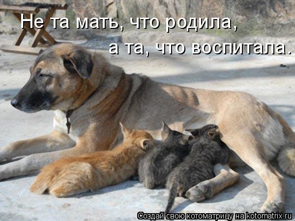 Котоматрица: Не та мать, что родила, а та, что воспитала.