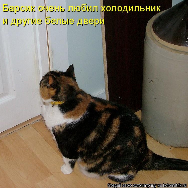 Котоматрица: Барсик очень любил холодильник и другие белые двери