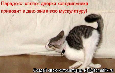 Котоматрица: Парадокс: хлопок дверки холодильника приводит в движение всю мускулатуру!