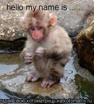 Котоматрица: hello my name is .......