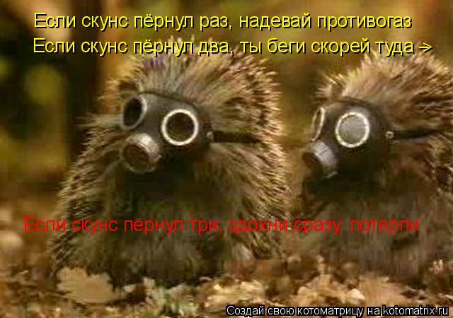 Котоматрица: Если скунс пёрнул раз, надевай противогаз Если скунс пёрнул два, ты беги скорей туда  Если скунс пёрнул три, здохни сразу, потерпи _ >