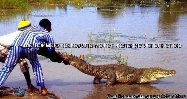 Котоматрица: ща поймаю кракодила может желание исполнетюю