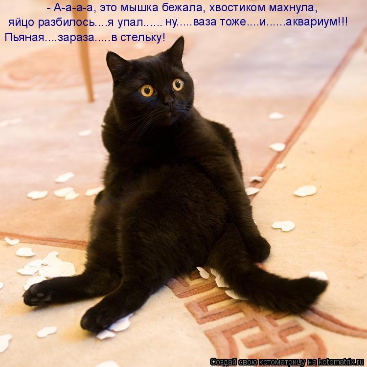 Котоматрица: ну.....ваза тоже....и......аквариум!!! - А-а-а-а, это мышка бежала, хвостиком махнула,  яйцо разбилось....я упал...... Пьяная....зараза.....в стельку!