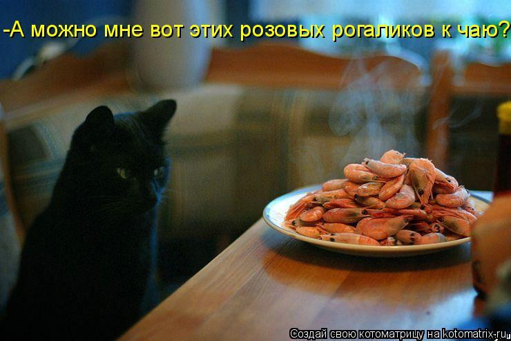 Котоматрица: -А можно мне вот этих розовых рогаликов к чаю?