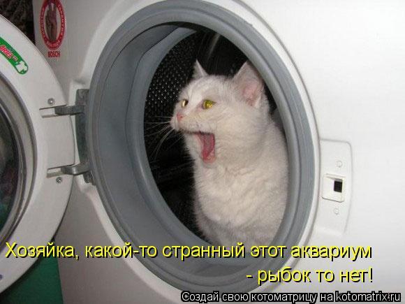 Котоматрица: Хозяйка, какой-то странный этот аквариум  - рыбок то нет!