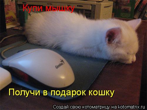 Котоматрица: Купи мышку Получи в подарок кошку