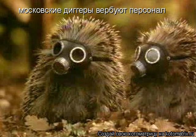 Котоматрица: московские диггеры вербуют персонал