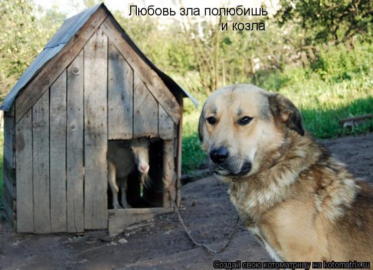 Котоматрица: Любовь зла полюбишь и козла