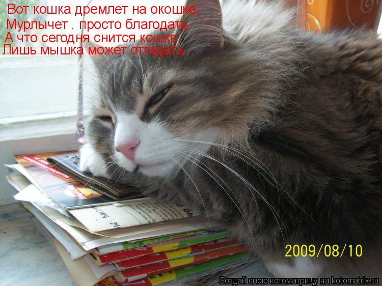 Котоматрица: Вот кошка дремлет на окошке, Мурлычет – просто благодать. А что сегодня снится кошке – Лишь мышка может отгадать.