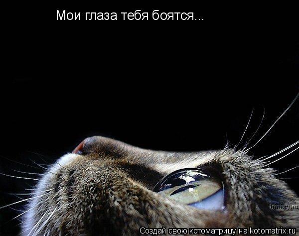 Котоматрица: Мои глаза тебя боятся...