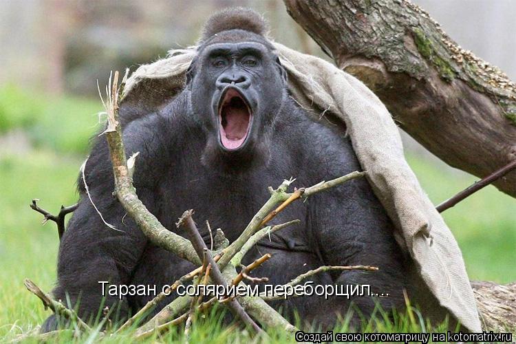 Котоматрица: Тарзан с солярием переборщил....