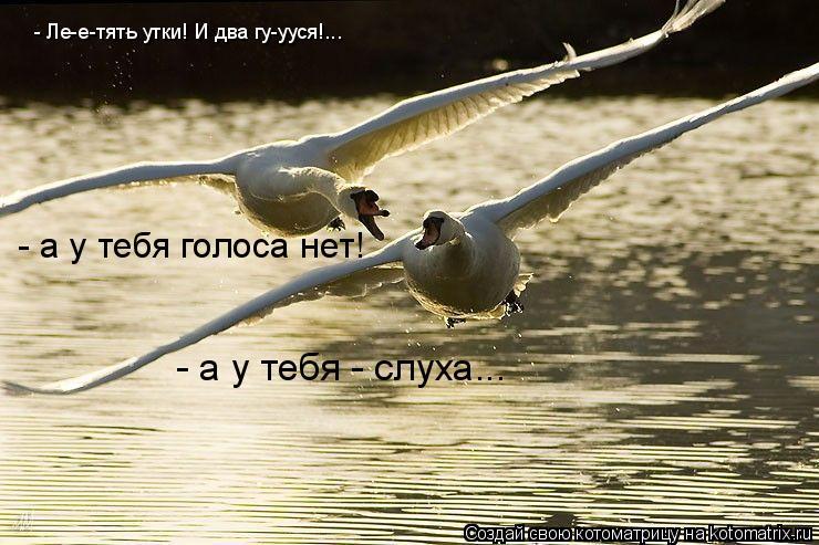 Котоматрица: - Ле-е-тять утки! И два гу-ууся!...  - а у тебя голоса нет!  - а у тебя - слуха...