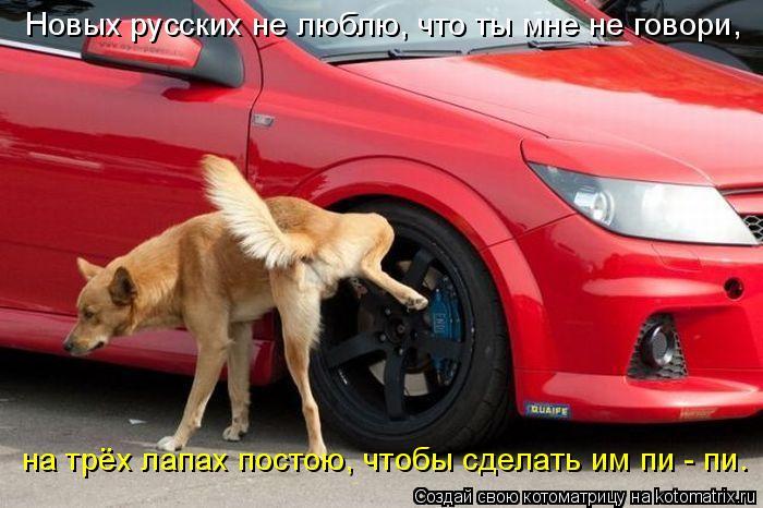Котоматрица: Новых русских не люблю, что ты мне не говори, на трёх лапах постою, чтобы сделать им пи - пи.