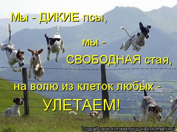 Котоматрица: Мы - ДИКИЕ псы, мы - СВОБОДНАЯ стая, на волю из клеток любых - УЛЕТАЕМ!