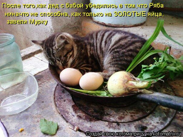 Котоматрица: После того,как дед с бабой убедились в том,что Ряба   ниначто не способна, как только на ЗОЛОТЫЕ яйца,   завели Мурку