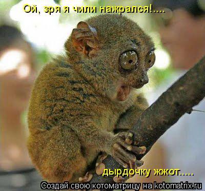 Котоматрица: Ой, зря я чили нажрался!.... дырдочку жжот.....