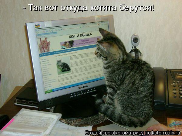 Котоматрица: - Так вот откуда котята берутся!