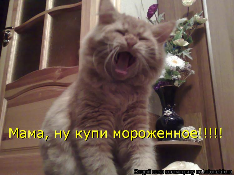 Котоматрица: Мама, ну купи мороженное!!!!!