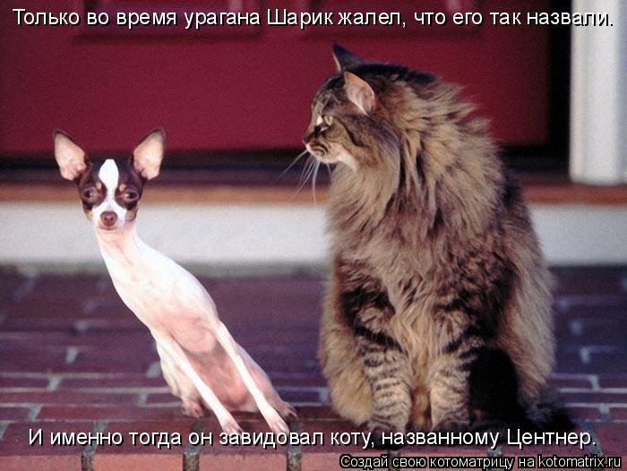 Котоматрица: Только во время урагана Шарик жалел, что его так назвали. И именно тогда он завидовал коту, названному Центнер.
