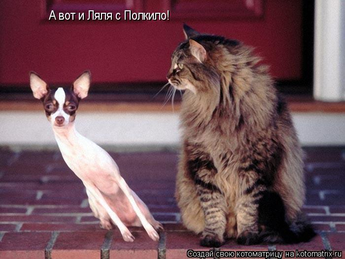 Котоматрица: А вот и Ляля с Полкило!
