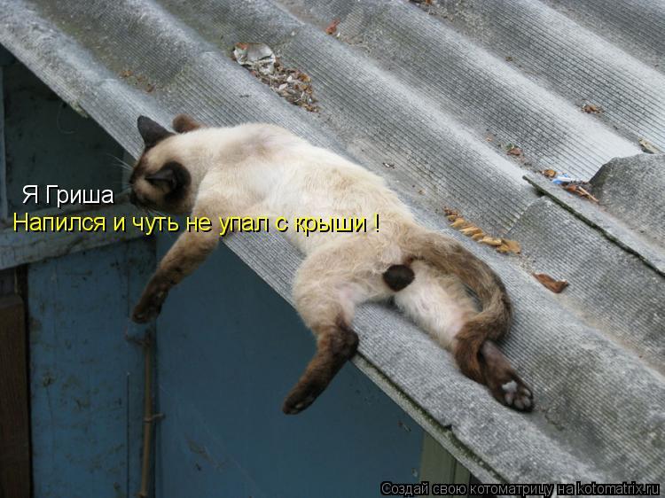 Котоматрица: Я Гриша Напился и чуть не упал с крыши !
