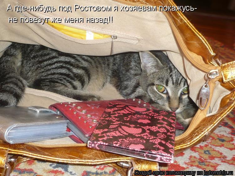 Котоматрица: А где-нибудь под Ростовом я хозяевам покажусь- не повезут же меня назад!!