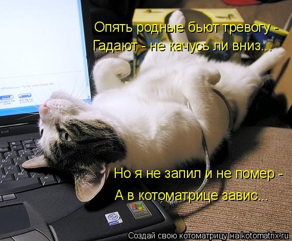 Котоматрица: Опять родные бьют тревогу - Гадают - не качусь ли вниз... Но я не запил и не помер - А в котоматрице завис...