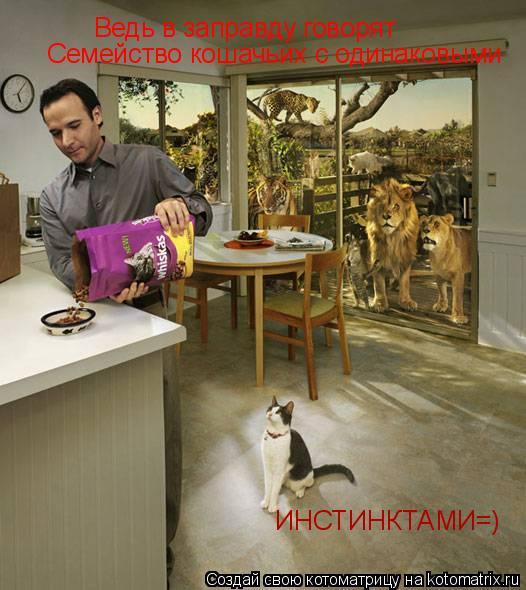 Котоматрица: Ведь в заправду говорят Семейство кошачьих с одинаковыми ИНСТИНКТАМИ=)