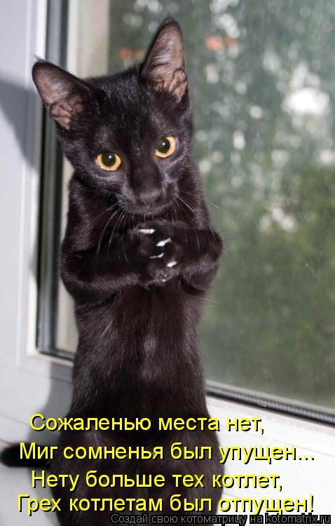 Котоматрица: Сожаленью места нет, Миг сомненья был упущен... Нету больше тех котлет, Грех котлетам был отпущен!