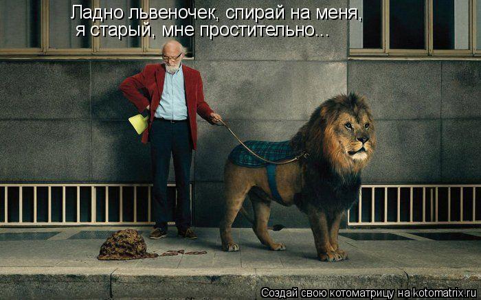 Котоматрица: Ладно львеночек, спирай на меня, я старый, мне простительно...