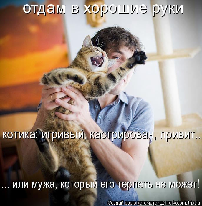 Котоматрица: отдам в хорошие руки котика: игривый, кастрирован, привит...   ... или мужа, который его терпеть не может!