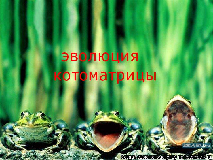 Котоматрица: эволюция котоматрицы