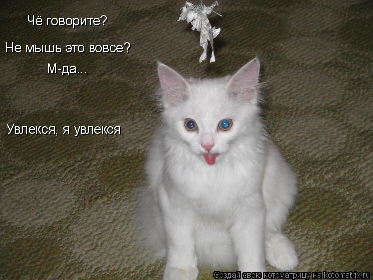 Котоматрица: Чё говорите? Не мышь это вовсе? М-да... Увлекся, я увлекся