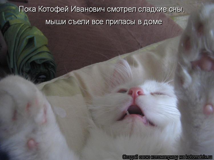 Котоматрица: Пока Котофей Иванович смотрел сладкие сны,  мыши съели все припасы в доме