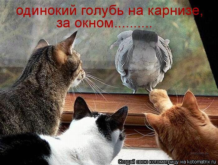 Котоматрица: одинокий голубь на карнизе, за окном..........