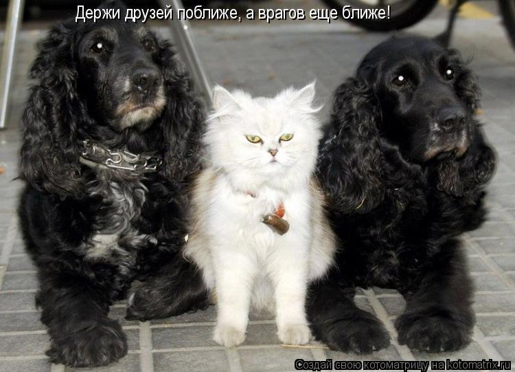 Котоматрица: Держи друзей поближе, а врагов еще ближе!