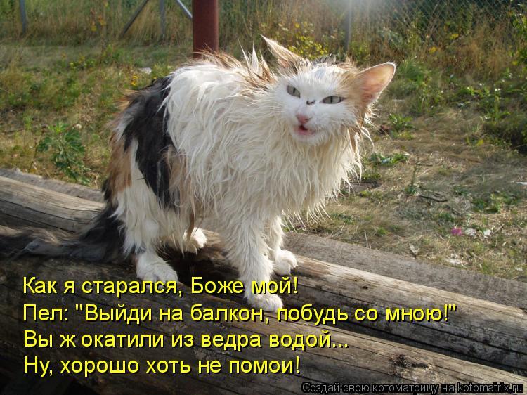 """Котоматрица: Как я старался, Боже мой! Пел: """"Выйди на балкон, побудь со мною!"""" Вы ж окатили из ведра водой... Ну, хорошо хоть не помои!"""