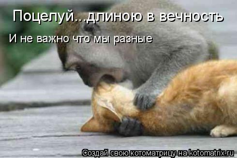 Котоматрица: Поцелуй...длиною в вечность И не важно что мы разные