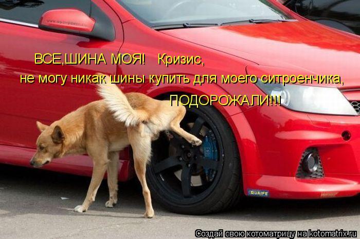Котоматрица: ВСЕ,ШИНА МОЯ!Кризис не могу никак шины купить для моего ситроенчика, ПОДОРОЖАЛИ!!! ВСЕ,ШИНА МОЯ!   Кризис,