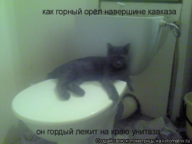 Котоматрица: как горный орёл навершине кавказа он гордый лежит на краю унитаза