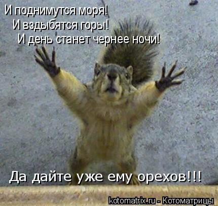 Котоматрица: И поднимутся моря! И вздыбятся горы! И день станет чернее ночи! Да дайте уже ему орехов!!!