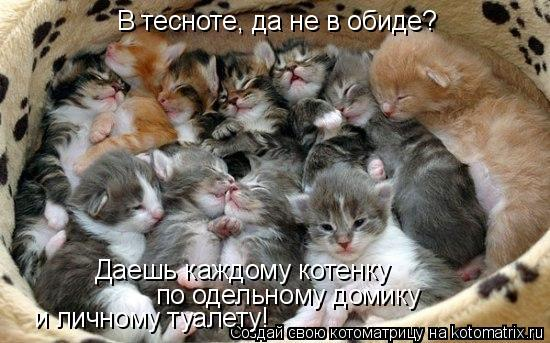 Котоматрица: В тесноте, да не в обиде? Даешь каждому котенку  по одельному домику  и личному туалету!