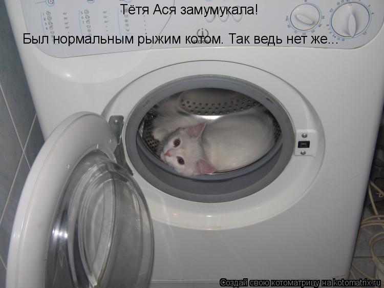 Котоматрица: Тётя Ася замумукала! Был нормальным рыжим котом. Так ведь нет же...
