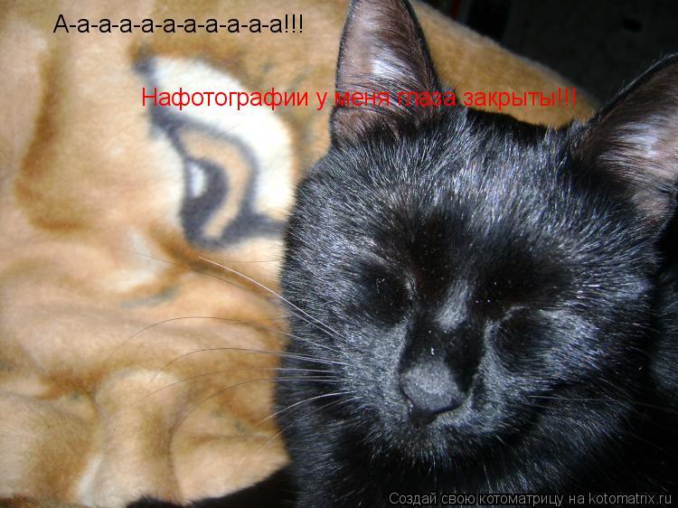 Котоматрица: А-а-а-а-а-а-а-а-а-а-а!!! Нафотографии у меня глаза закрыты!!!