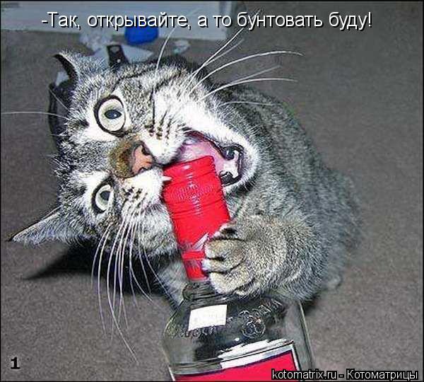 Котоматрица: -Так, открывайте, а то бунтовать буду!