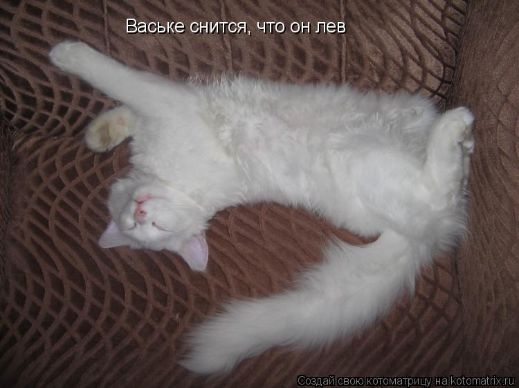 Котоматрица: Ваське снится, что он лев