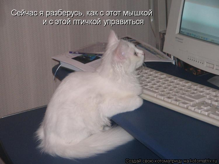 Котоматрица: Сейчас я разберусь, как с этот мышкой  и с этой птичкой управиться